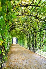 Walkway under ornamental climbing plants at Schönbrunn Palace in