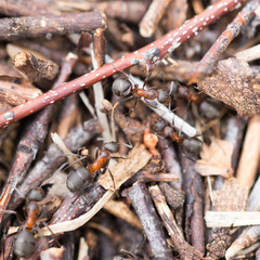 ants in nature. close-up