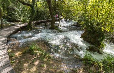 Forêt inondée et rivière