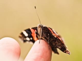 Ein Schmetterling auf dem Finger