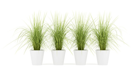 four potted houseplants isolated on white background