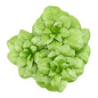 top view of basil plant isolated on white background