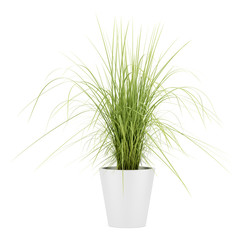 potted houseplant isolated on white background