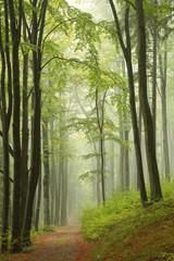 Trail through misty autumn forest