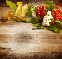 Rowan branch with berries on old wooden background