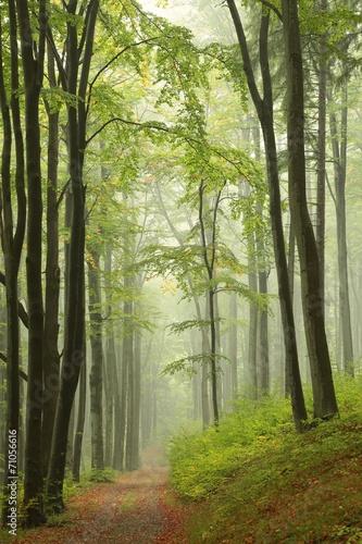 Fotobehang Bos in mist Trail through misty autumn forest
