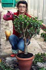 woman takes care of indoor ornamental plants