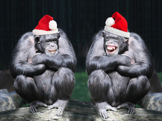 Two chimpanzees have a fun on christmas party in a rainforest.