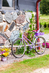 Glamour purple lavender stylish retro bicycle. Outdoors.