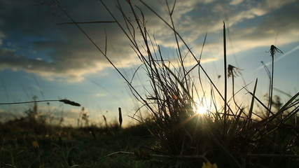 Sun setting between reeds of grass and dried flowers