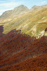 monte cusna faggeta foresta in autunno crinale appennino