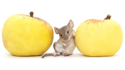 mouse and apple on a white background