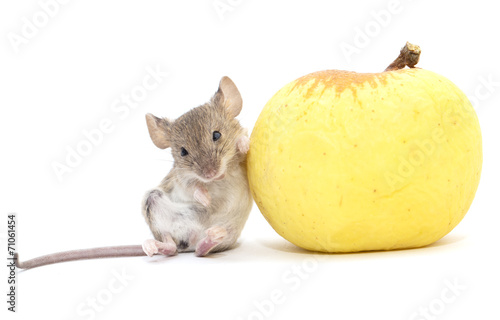 mouse and apple on a white background - 71061454