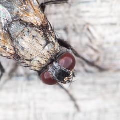 fly. close-up