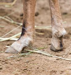hooves