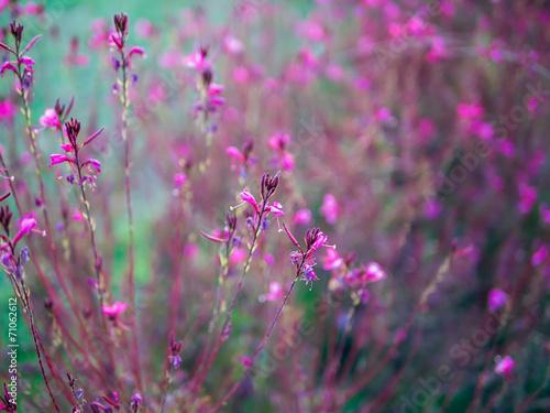 Pinc flowers © sonyakamoz