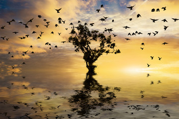 Single tree on water with sunrise and birds