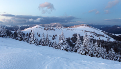 Forest mountain at winter, Slovakia