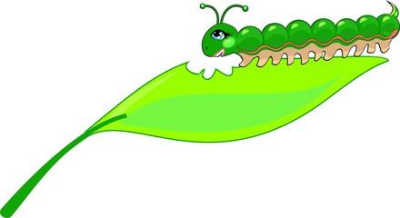 Green caterpillar eating a leaf