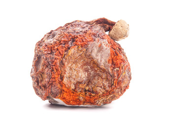 Red kuri squash with mold