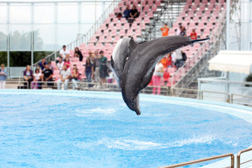dolphin show at the dolphinarium