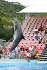 dolphin in a show
