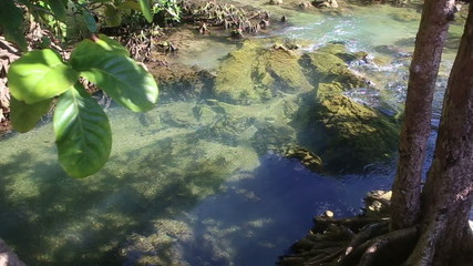 clear water flows among the mangrove roots