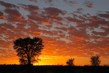 African sunset with silhouetted trees, Kalahari desert