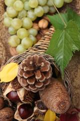 Fruits d'Automne : Raisin  Noix  Marron