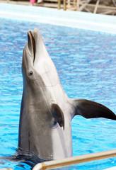 dolphin performance