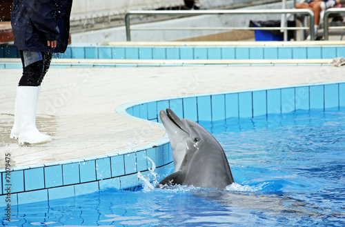Papiers peints Dauphin dolphin at the dolphinarium