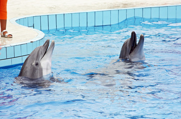 couple of dolphins at the dolphinarium