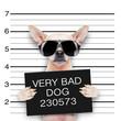 mugshot dog