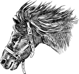 head of running horse
