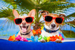canvas print picture - couple of dogs