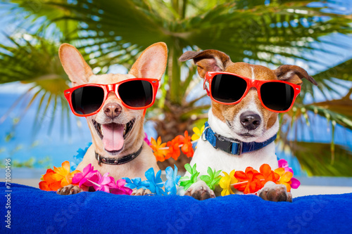 canvas print picture couple of dogs