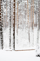 russian Winter forest snow road