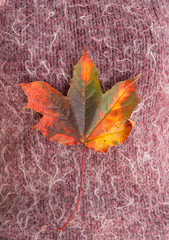autumn leaf on wool fabric background