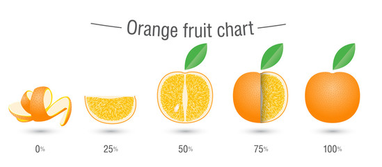 Orange fruit charts infographics