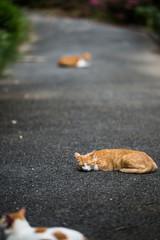 舗装道で休むのらねこ