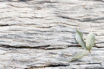 Natural wood texture and Leaf
