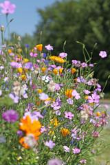 gazon fleuri