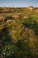 Ushant island meadow landscape