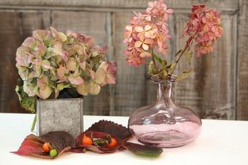 getrocknete Hortensienblüten im Herbst