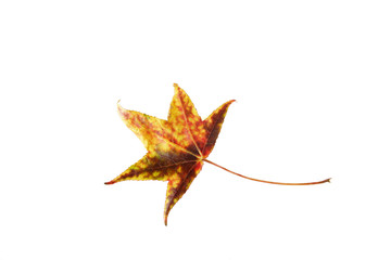 yellow-brown leaf isolated