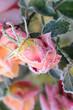 canvas print picture - Blumen 304