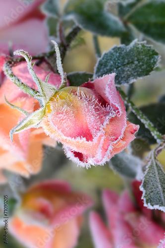 canvas print picture Blumen 304
