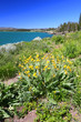 Yellowstone Lake and Wildflowers