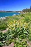 Yellowstone Lake and Wildflowers