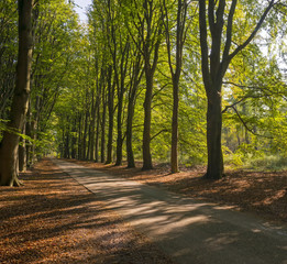Road through a beech forest at fall